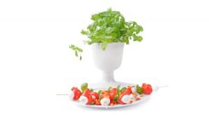 Szaszłyki z mini mozzarelli i pomidorków koktajlowych - Izabela Płóciennik Catering Optima Wrocław